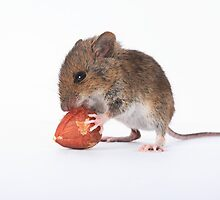 Mouse eating nut by EUNAN SWEENEY