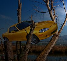Car gone wild, in a tree by happyphotos