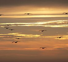 The Flock at Sunset (Morocco) by BGpix