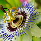 Passion  flower by EUNAN SWEENEY