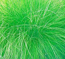 Abstract Grass photo painting by randycdesign