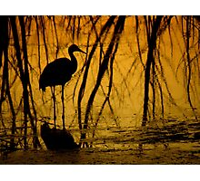 Avian Shadows ~ Part Two Photographic Print