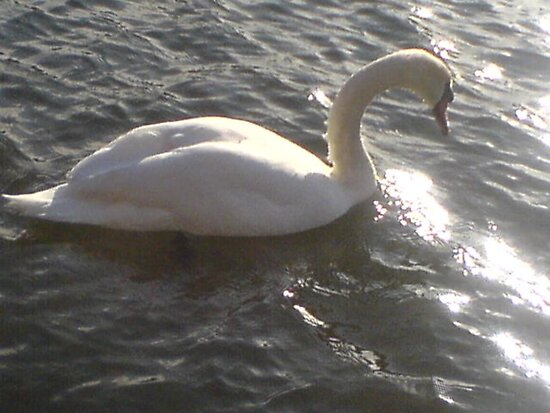 Rutherford the Swan by parakeetart