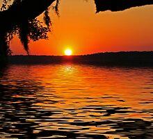 ~I'll Rise Again~ by Terri~Lynn Bealle