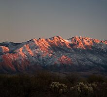 Snow Capped Santa Ritas at Sunset by David F Putnam