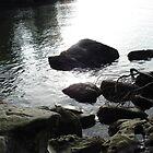On the rocks by Dorthy Ottaway