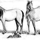 Ponies by stepanka