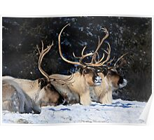Dasher, Dancer and Prancer, Santa Claus' Reindeers Poster