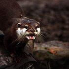Otter by kkimi88