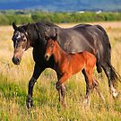 Mare  and  Foal. Ireland by EUNAN SWEENEY
