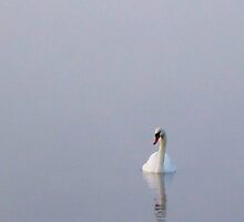 Swan in the early morning mist 2 by Kim  Ayres