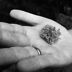 A Wee Moss- Zach's hand holding a mossy sphere by Erin Hause
