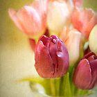 Tulips in Glass Vase by eyeshoot