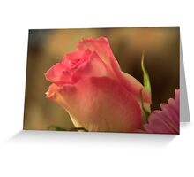 Soft Pink and White Rose, As Is Greeting Card