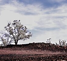 Ashen - Toodyay Fires. by Boxx