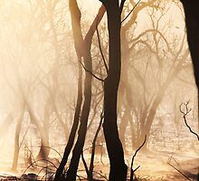 Ash Silhouette - Toodyay Fires. by Boxx