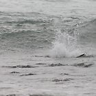 Osprey Dive Sequence - Submerged (2 of 6) by Matt  Harvey