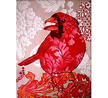 Red Bird Sitting on a Wall Photographic Print