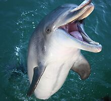 Wild Dolphin fun by Binita