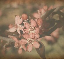 Crab Apple Blossom by Elaine Teague