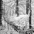 First snow of Winter by EUNAN SWEENEY