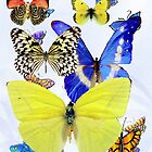 Butterfly Parade Blank Greeting Card by dorcas13