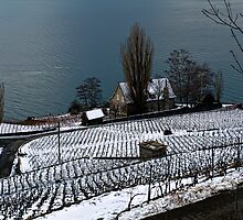 Vineyard on the Lake by Luca Renoldi