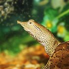 Spiny Soft shell turtle , 2  by MindsImage