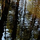 Reflection 01 - Pine Barrens, NJ by Aaron Minnick