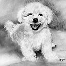What Bichon's Do to Make You.....Smile by jimmie