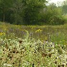 Wildflowers at Mays Lake by BonnieJames