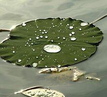 Lilypads - Chicago Botanic Garden by BonnieJames