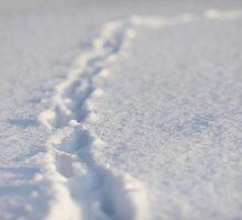 Tracks in the snow by Johan Hagelin