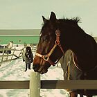Winter Horses by Louise Fahy