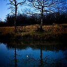 Half Moon - Two Trees by Richard Hamilton-Veal