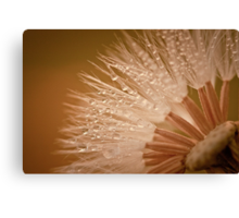 Delicate Strength Canvas Print