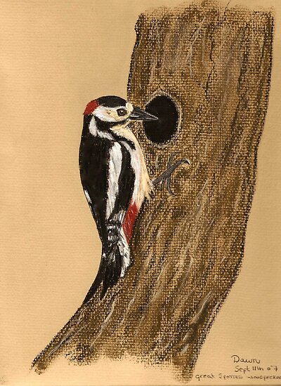 Greater Spotted Woodpecker by Dawn B Davies-McIninch