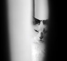 Black and White Menace by Ladymoose