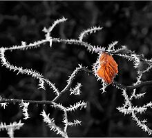 The Final Leaf by Richard Ion