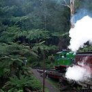 Puffing Billy heads back into the fern forest, Dandenong Ranges, Vic by BronReid