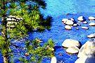 """Sunlit Pine"" by Lynn Bawden"