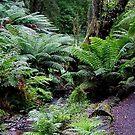 Tarra Valley National Park, Strzelecki Ranges, Gippsland by BronReid