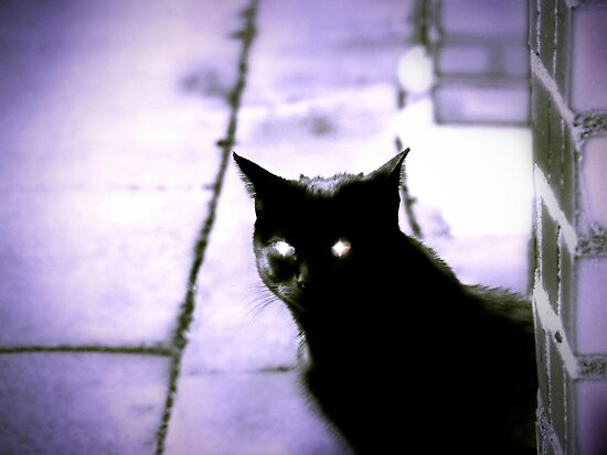 Night Stalker by shutterbug2010