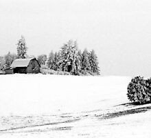 FARM IN HOAR FROST by Rodney55