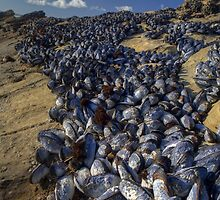 Sea of Mussels by Cathy L. Gregg