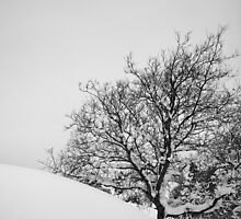 Tree in slope by Johan Hagelin