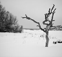 The Snowy Dead Tree by Johan Hagelin