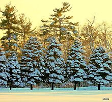 Winter solace by Nancy Magnuson