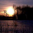 Dawn Through the Reeds by Kim McClain Gregal