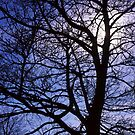Tree and Sky by PigleT